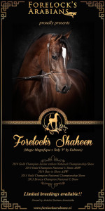 Forelocks Shaheen breeding 2015